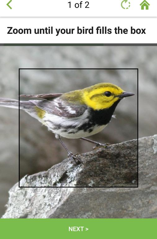 Распознаём птицу по фотографии