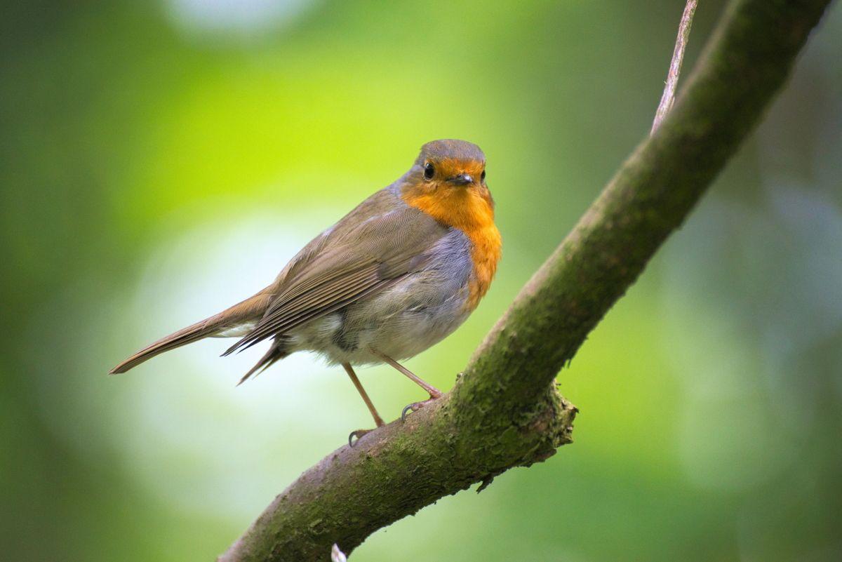 7 мобильных приложений для любителей птиц