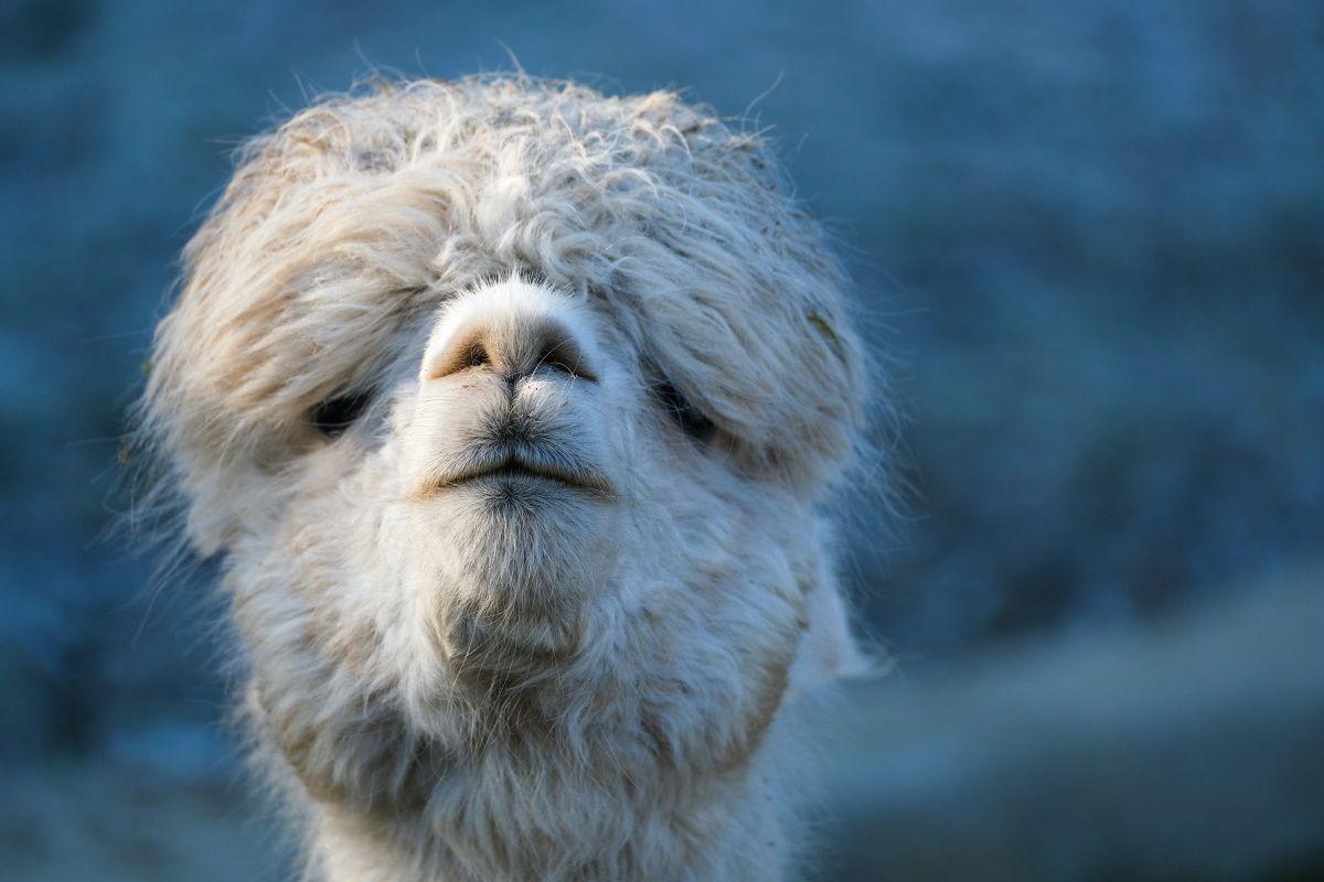 Alpaca поможет открывать ссылки из Slack в нативном приложении